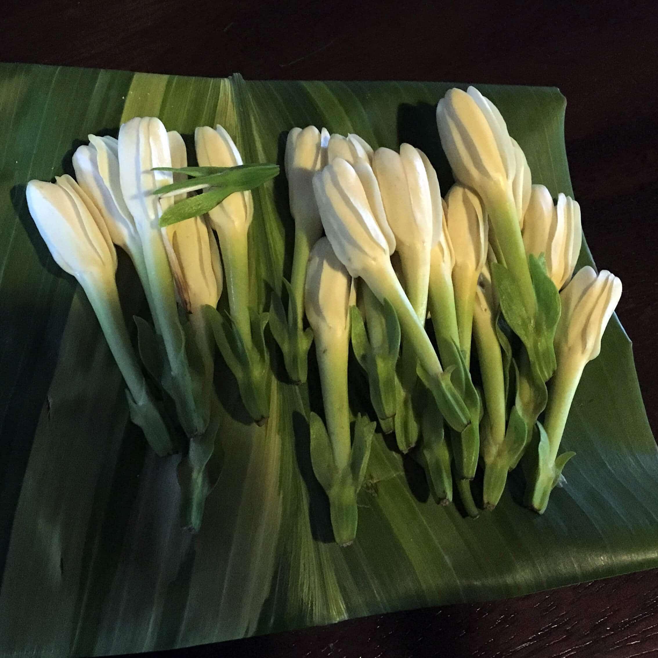 Tiare Tahiti (Gardenia Taitensis)