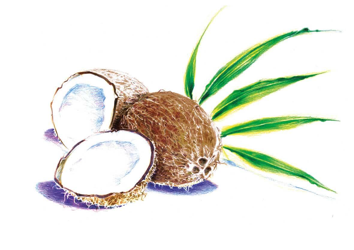 Kokosöl ∙ Kokosmilchextrakt