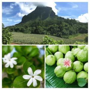 Zutaten von Tahiti